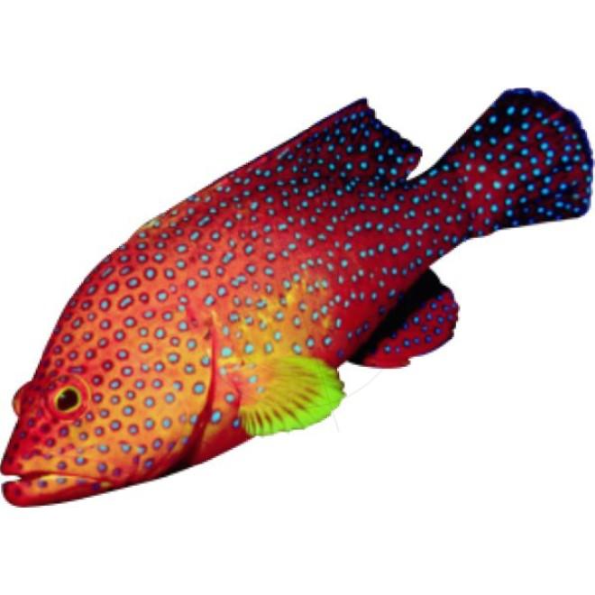 Fische verschiedene arten schaufensteraufkleber und for Fische arten